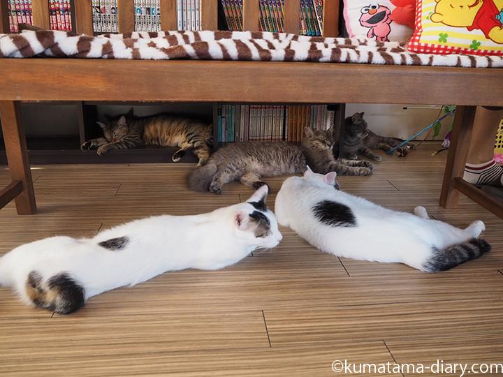 寝そべる猫さん