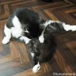 体が柔らかい「ネコリパブリック東京中野店」の黒白猫さん