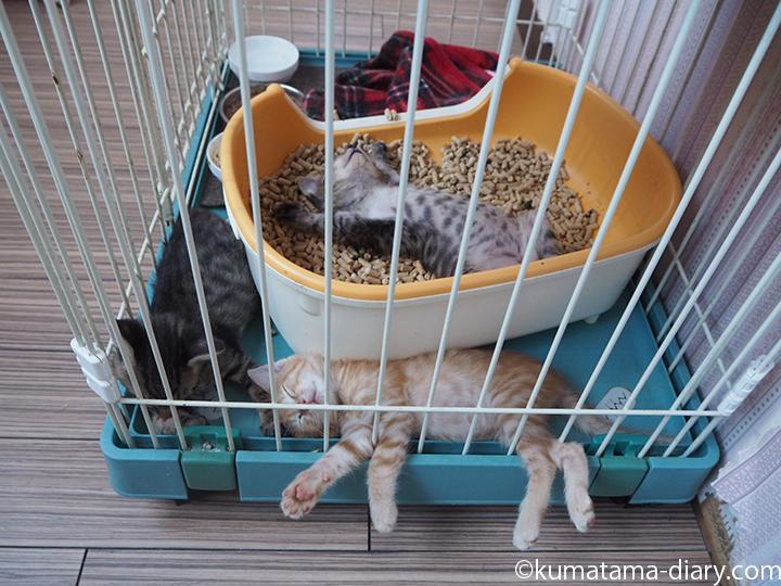眠る子猫さんたち