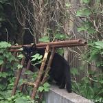 入間市の小谷田で見かけた凛々しい黒猫さん