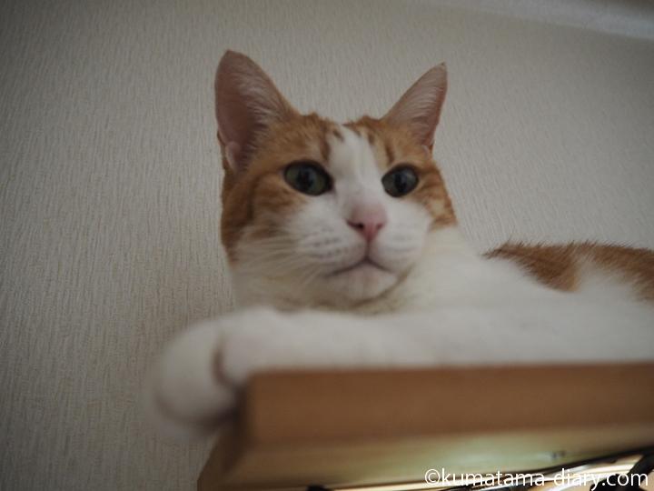 カーテンレールの上のたまきの顔