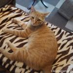 好きな場所で思い思いに過ごす保護猫カフェ「funnyCat」の猫さんたち