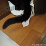 おしりを向けて「オムロン メッシュ式ネブライザ NE-U22」の吸入を拒否する猫