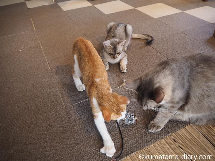 おもちゃに群がる3匹