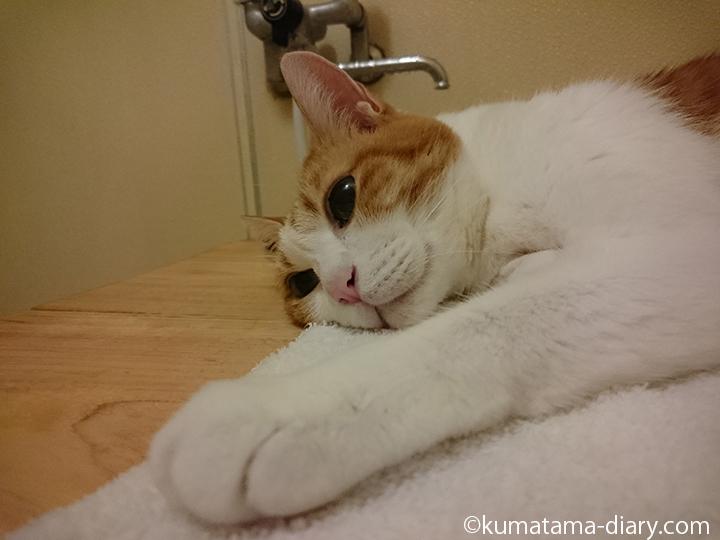 お風呂のフタの上で寝るたまき