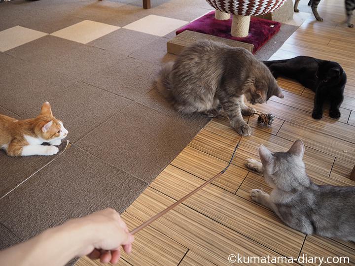遊んでくれる猫さんたち