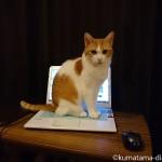 ノートパソコンに乗りたがる猫