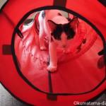 大きくなっていた保護猫カフェ「funnyCat(ファニーキャット)」の白黒猫さん