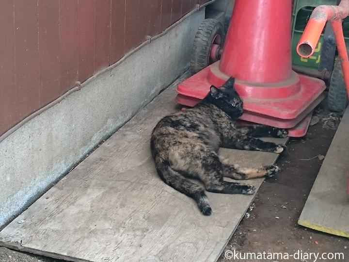 もう一匹のサビ猫さん