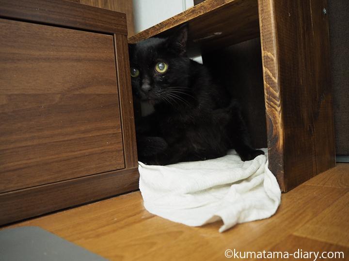 棚の下のくま