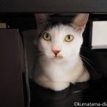 見分けられるようになった保護猫カフェ「funnyCat」の顔がそっくりな猫さんたち