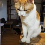 猫の手作りごはんの材料の準備~メインの鶏ムネ肉以外~