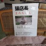 【加須市】和菓子屋「青木屋本店」の猫店長まろちゃん