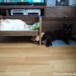 テレビの前でくつろぐ2匹の猫