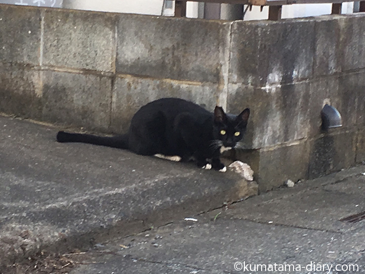 入間黒白猫さん発見