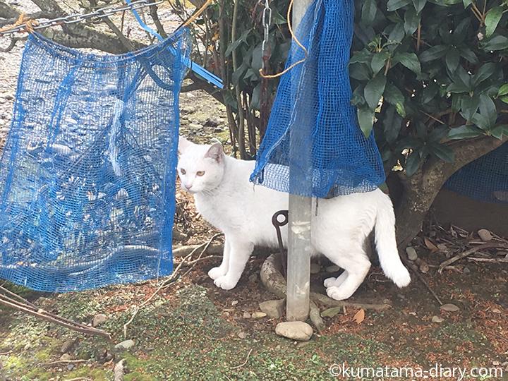 入間白猫さん発見