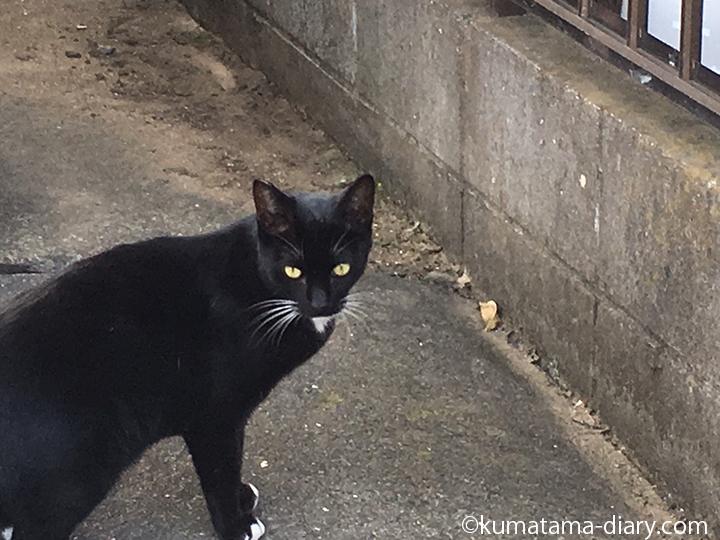 入間黒白猫さん