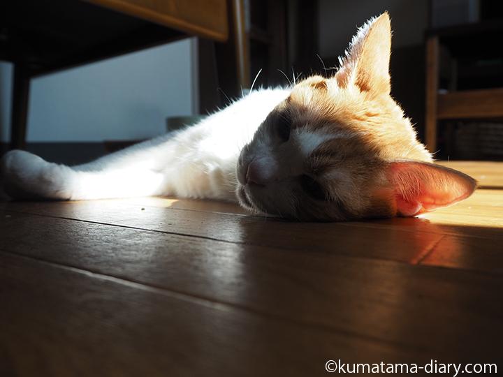 寝そべるたまき