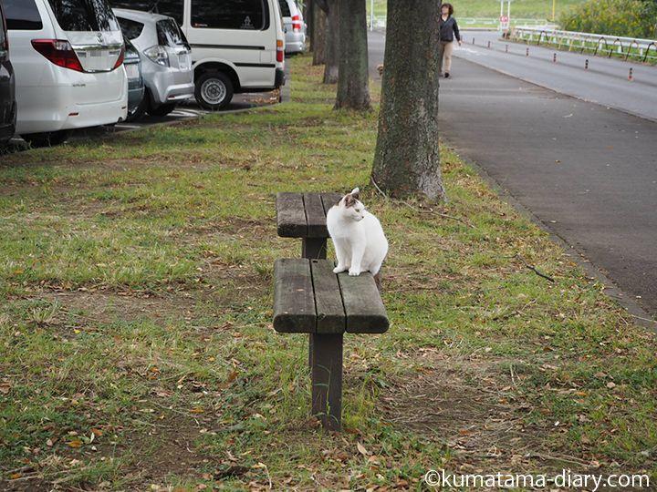 駐車場で猫さん発見