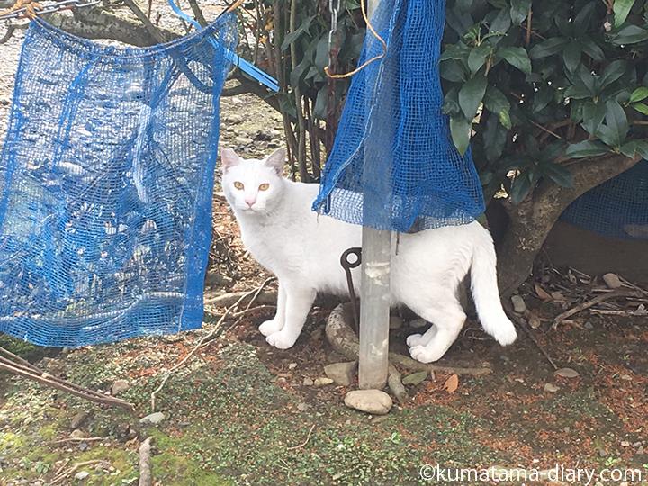 入間白猫さん