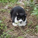 ヤクルトスワローズ戸田寮の近くにいた猫さん