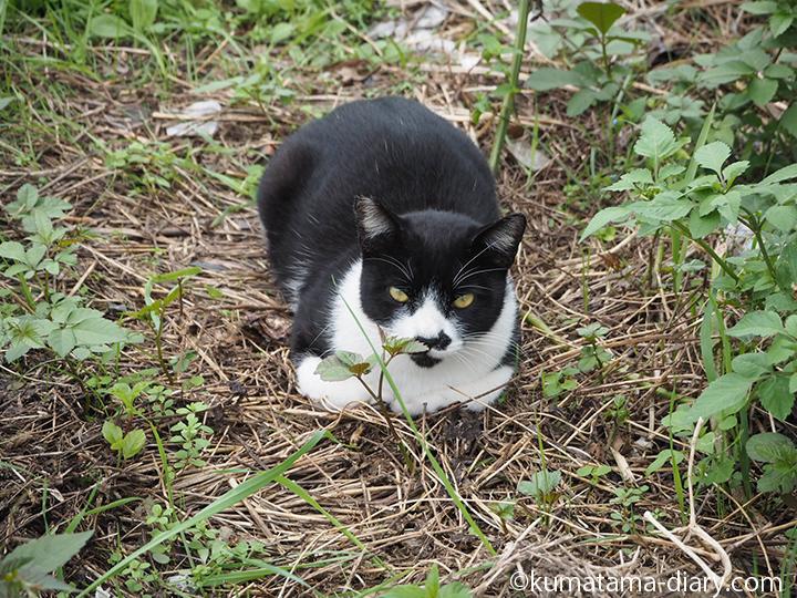 黒白猫さん正面