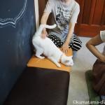 「ネコリパブリック東京御茶ノ水店」の幸福を呼ぶかぎしっぽを持つ白猫さん