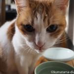 おでこにエサが付いていても気にせず水を飲む猫