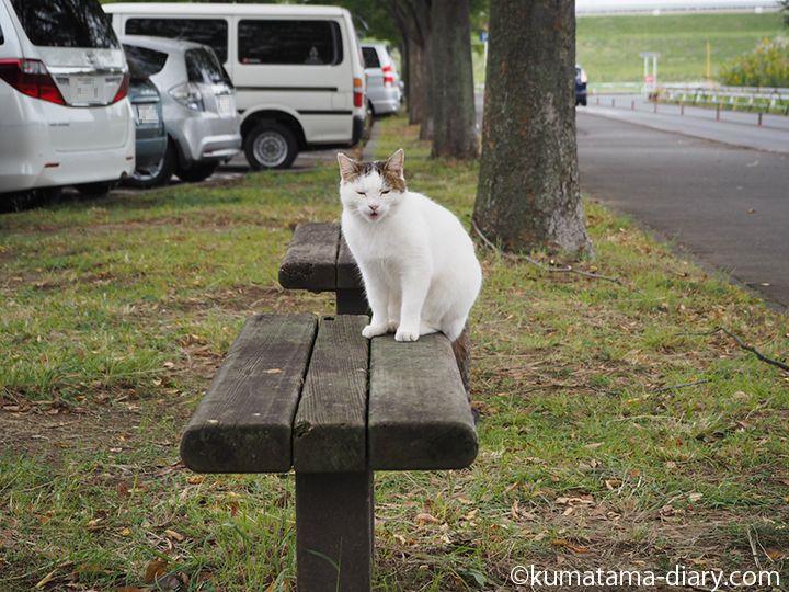 ベンチの上で鳴く猫さん