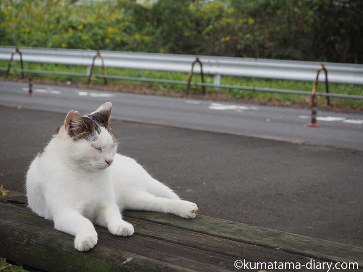 ベンチの猫さん