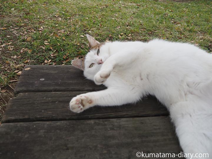 寝転がる猫さん