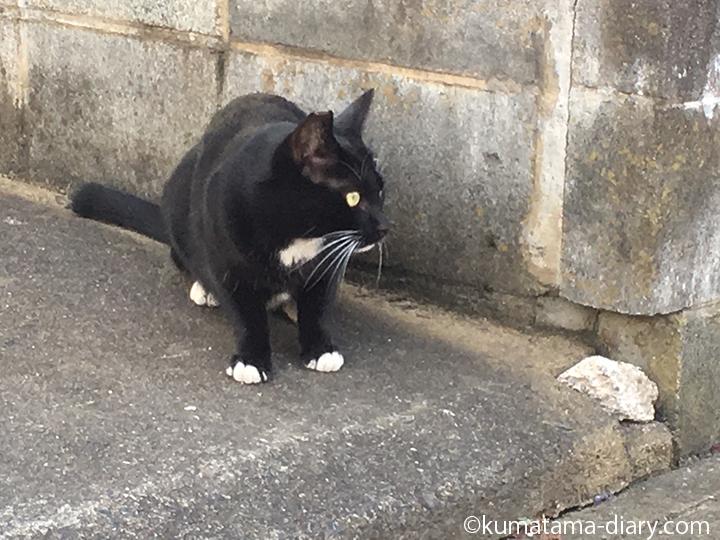 入間黒白猫さん左右確認