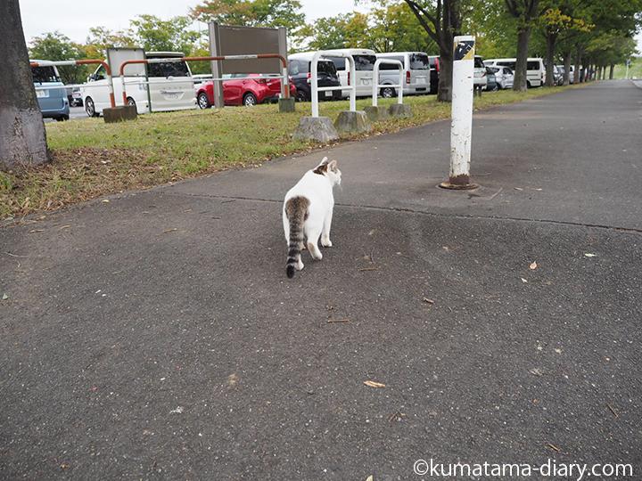 歩く駐車場の猫さん