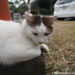 埼玉県戸田市「彩湖・道満グリーンパーク」の人懐っこい猫さん