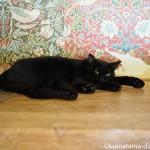 【ねこまつり at 湯島】保護猫カフェ「ネコリパブリック東京お茶の水店」で猫カフェ体験