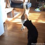 飼い主が旅行で家にいないときの猫たち