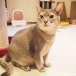 トライアルが決まった保護猫カフェ「funnyCat」のイケメン猫さん