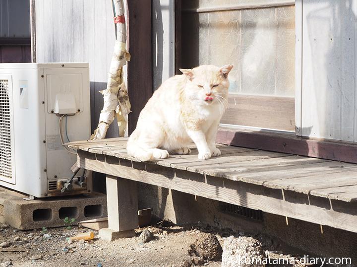 縁側でひなたぼっこする猫さん立ち上がる