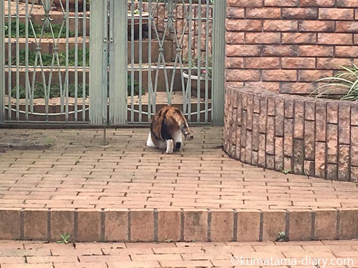 門をくぐる三毛猫さん