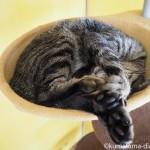「ネコリパブリック東京御茶ノ水店」のいろんな場所で眠る猫さんたち