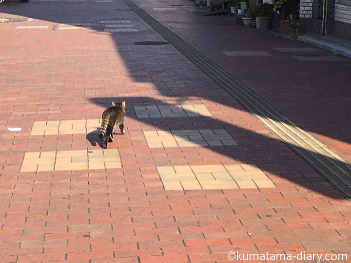 自分ちへ向かうキジトラ猫さん