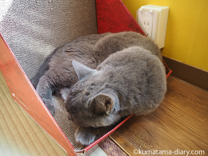 爪とぎで眠る猫さん