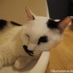 「ネコリパブリック池袋店」の白黒猫さんと白猫さん