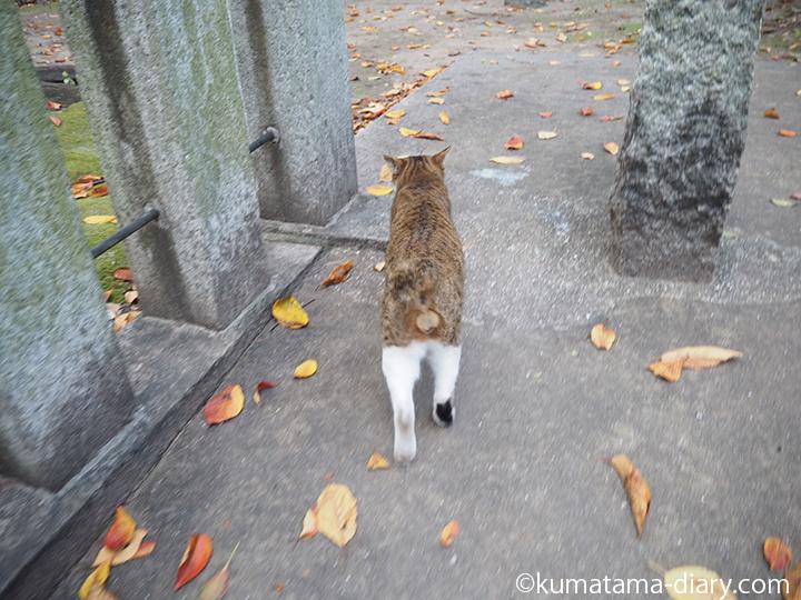 進む猫さん