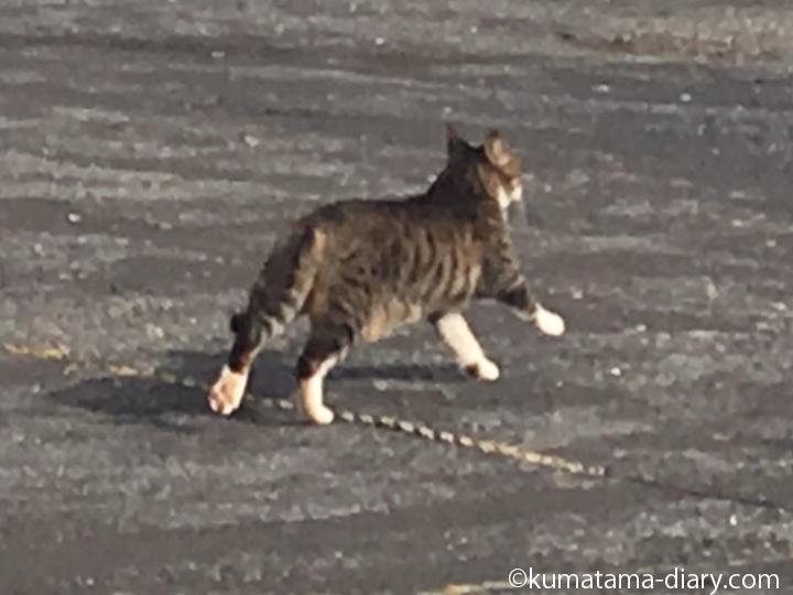 走る駐車場の猫さん
