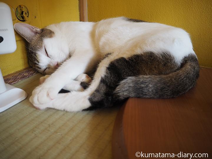 畳の上で寝るいっちゃん