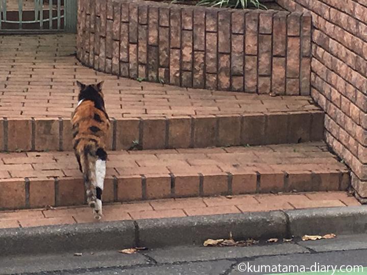 階段を上る三毛猫さん