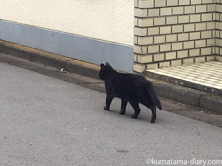 歩き去る黒猫さん