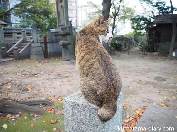 石の柱の上にのった猫さん