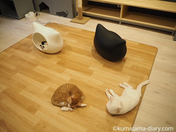 ホットカーペットの上で寝る猫さんたち